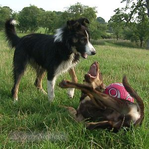 Mossie and Red play-fighting over a football