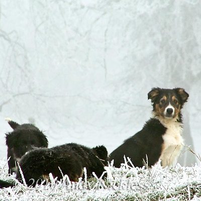 Puppies at play in the snow
