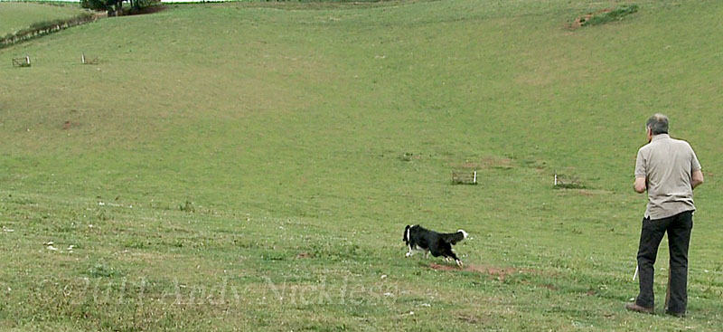 Trainee sheepdog Mo's first outrun on this field