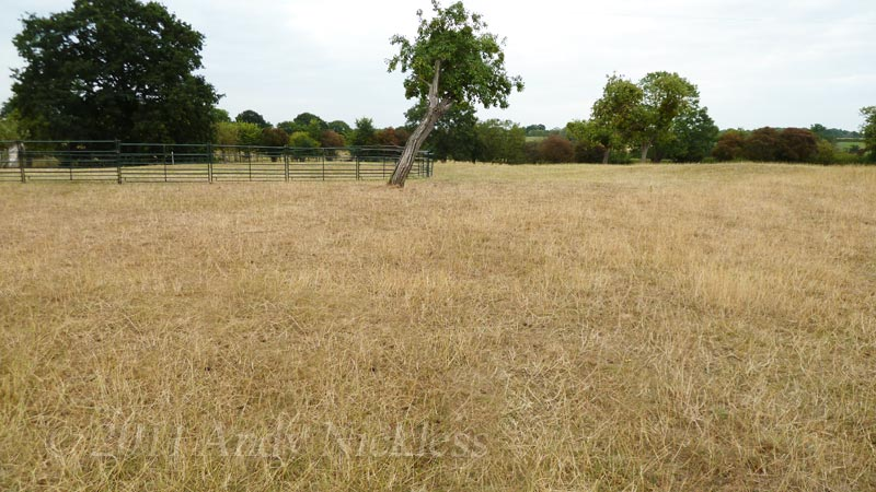 Field showing the effect of drought on a normally lush, green pasture in the UK