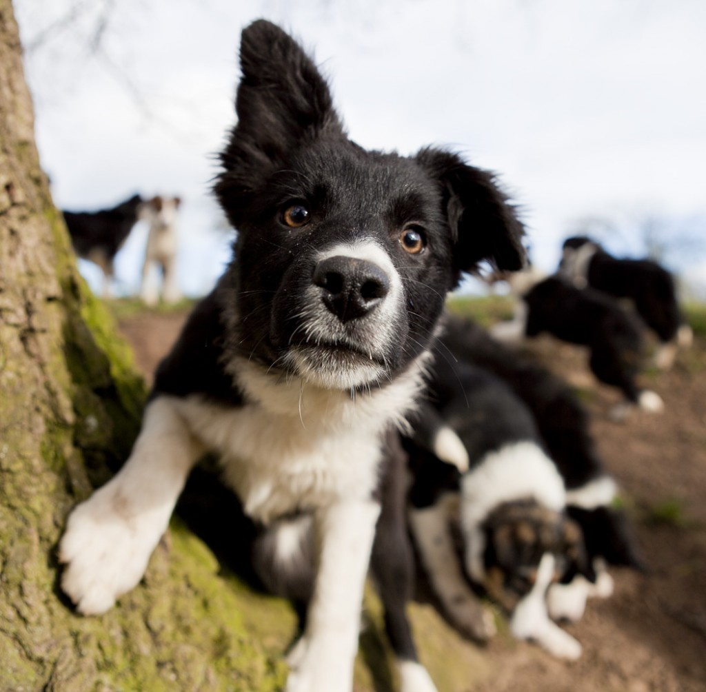 Find out about the puppies we have for sale