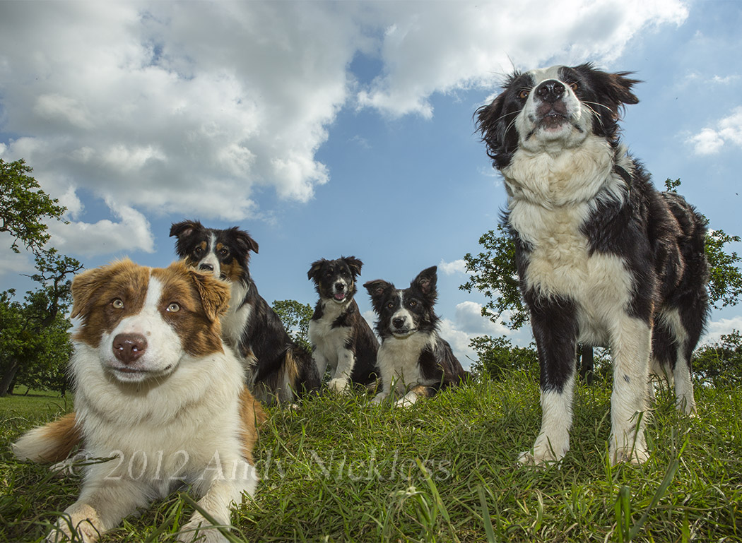 Close-up picture of a group of our dogs against a sunny sky