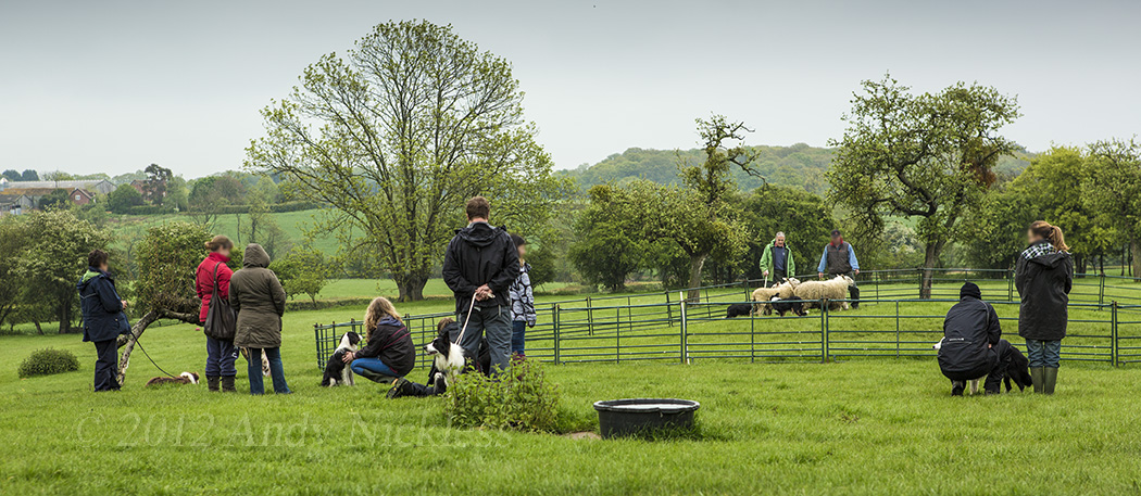 Details of our new dates for sheepdog training courses