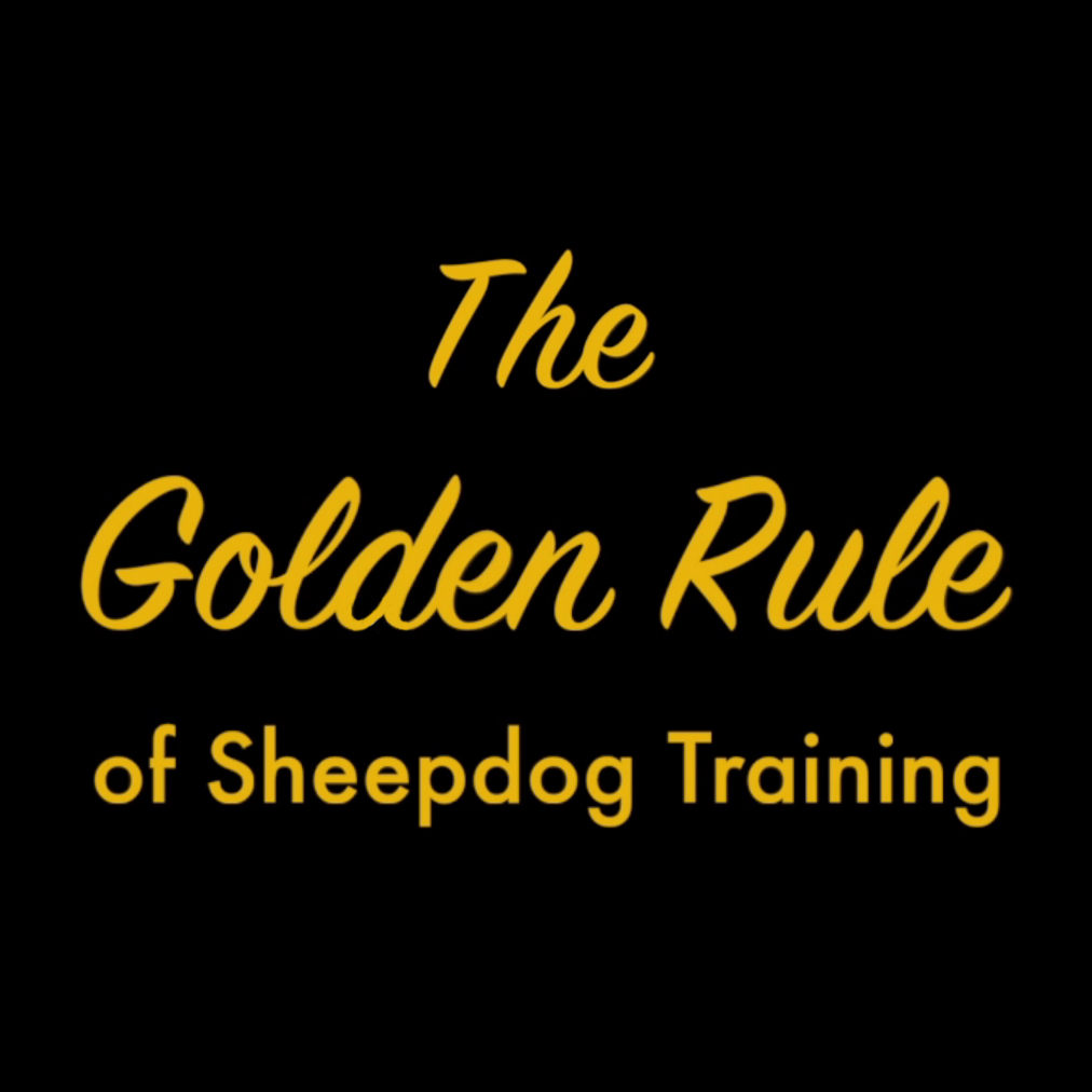 There are many important rules to observe when you train a sheepdog to herd sheep, but which one is the most important?