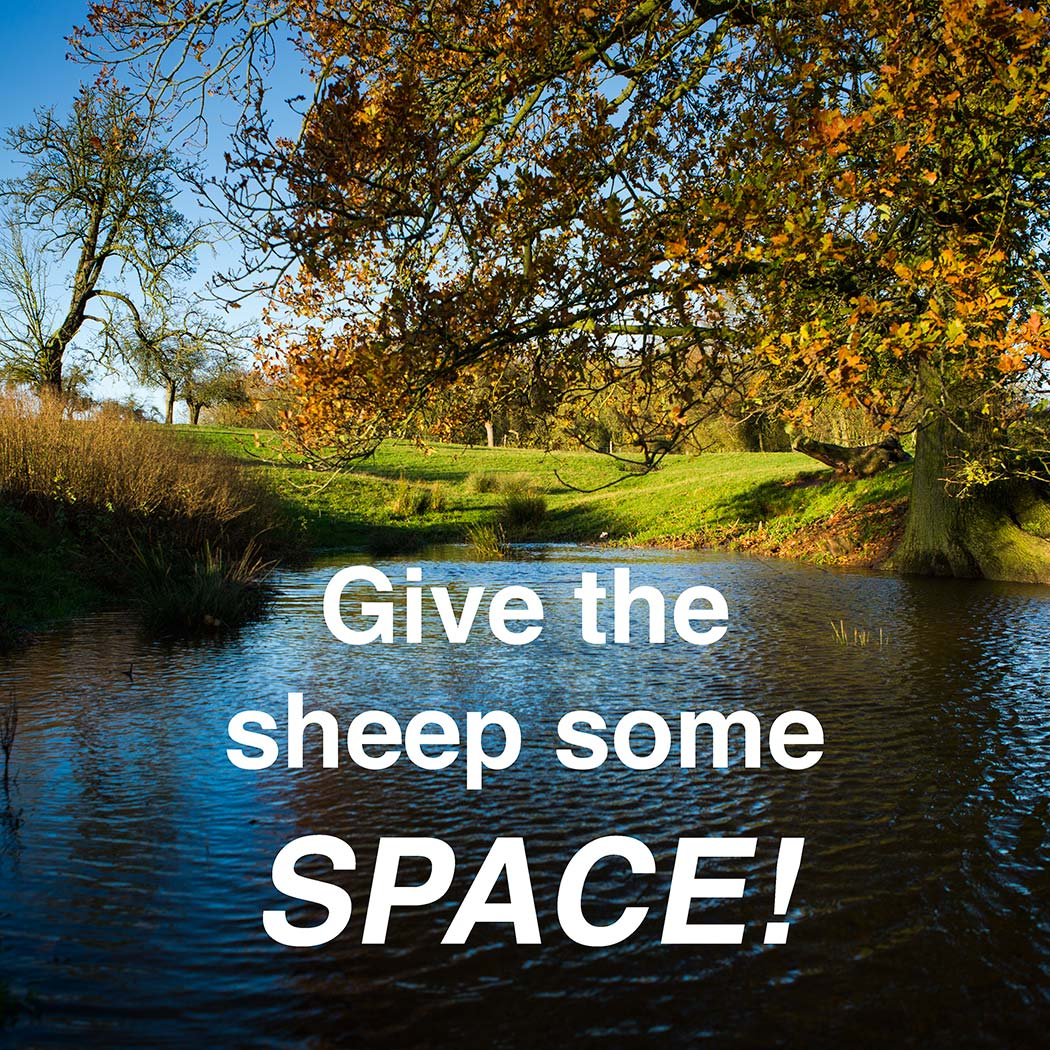Title of our sheepdog training tutorial - Give the Sheep Some Space!