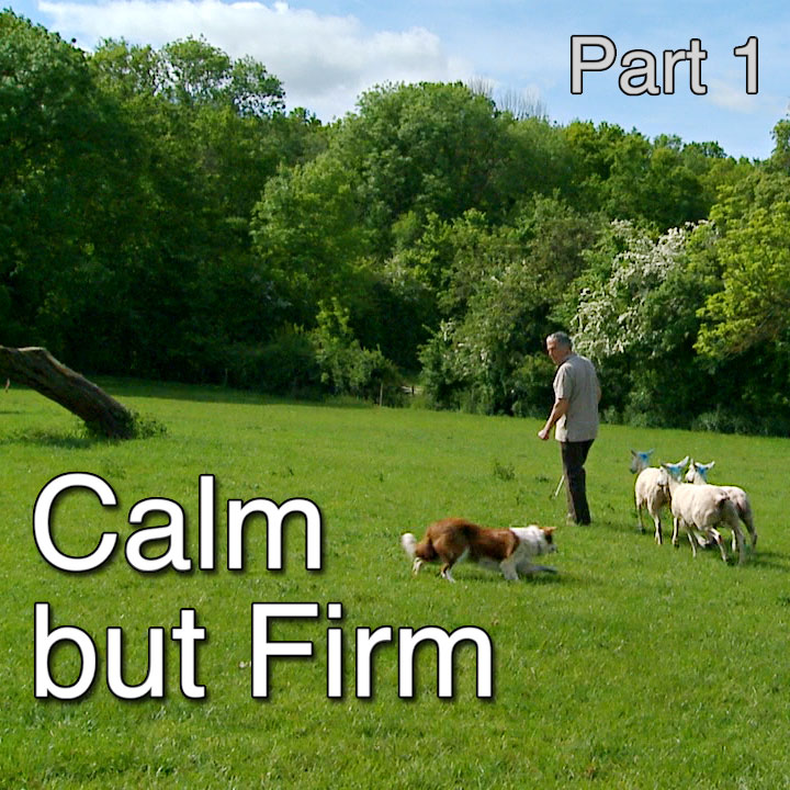 Title image of the Calm but Firm sheepdog training tutorial