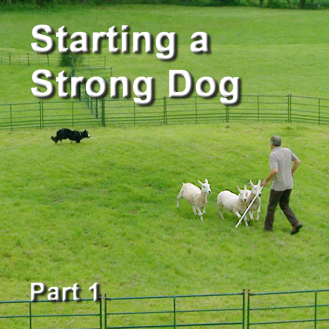 Starting a Strong Dog