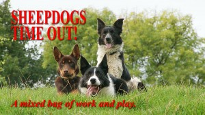 Sheepdogs Time Out title image - with two collies and a kelpie lying close together in the grass
