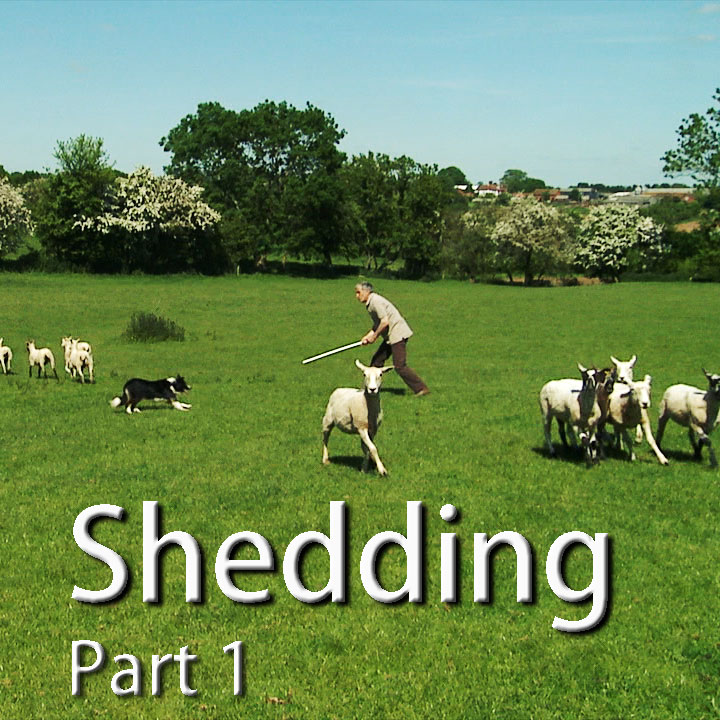 How to teach a sheepdog to shed sheep - cover pic
