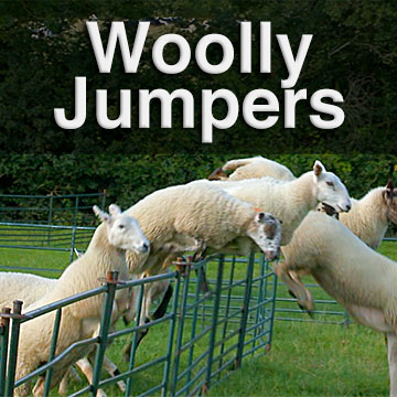 Sheep disrupt a herding training session by jumping out of the ring