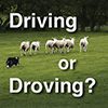 thumbnail for sheepdog driving tutorial video