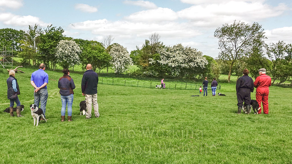 Students and their dogs on one of our sheepdog training courses