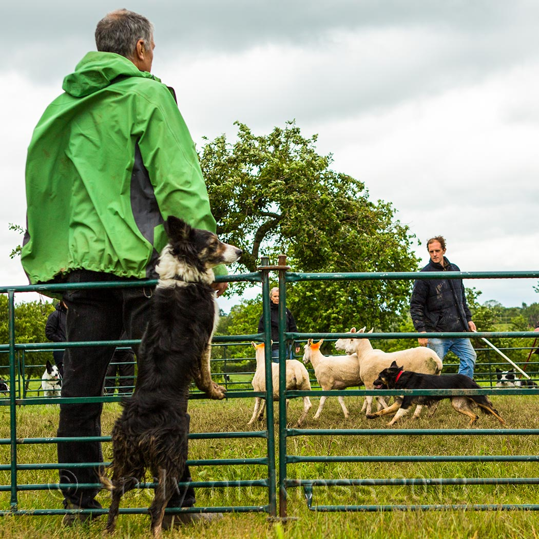 Instructor and dog watching a sheepdog training session