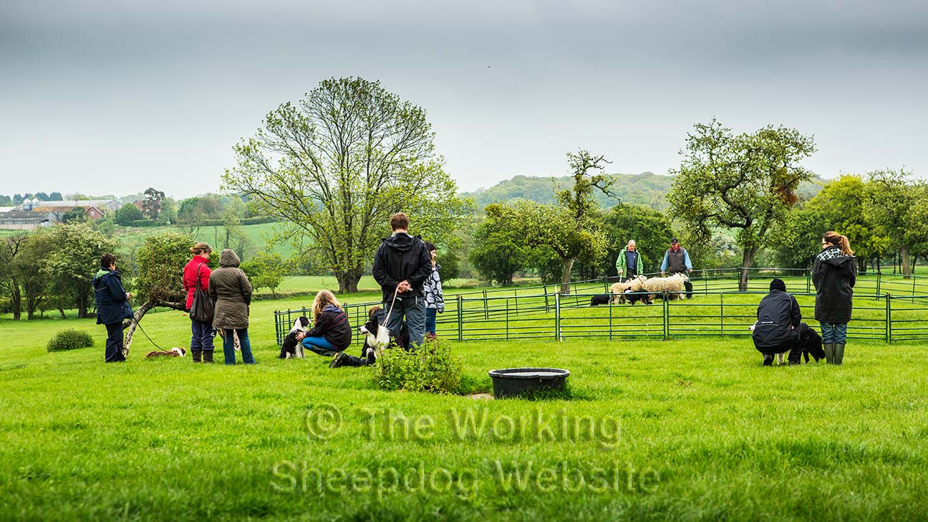 One of our sheepdog training courses classes and clinics in action