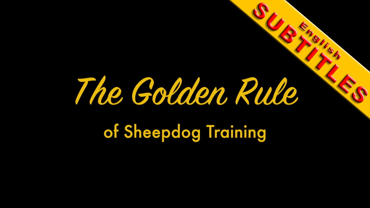 Cover pic of The Golden Rule of Sheepdog Training