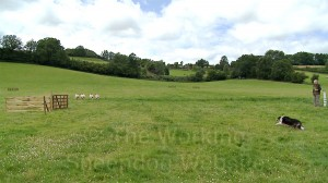 View of Mathon sheepdog trials field with a dog beginning the driving section