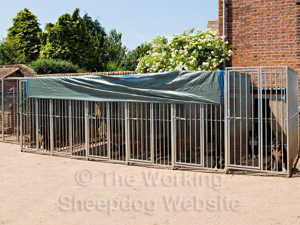 The dogs are shaded by the tarpaulin over their runs