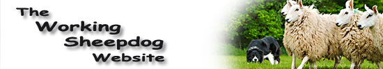 Banner for the Working Sheepdog Website login page