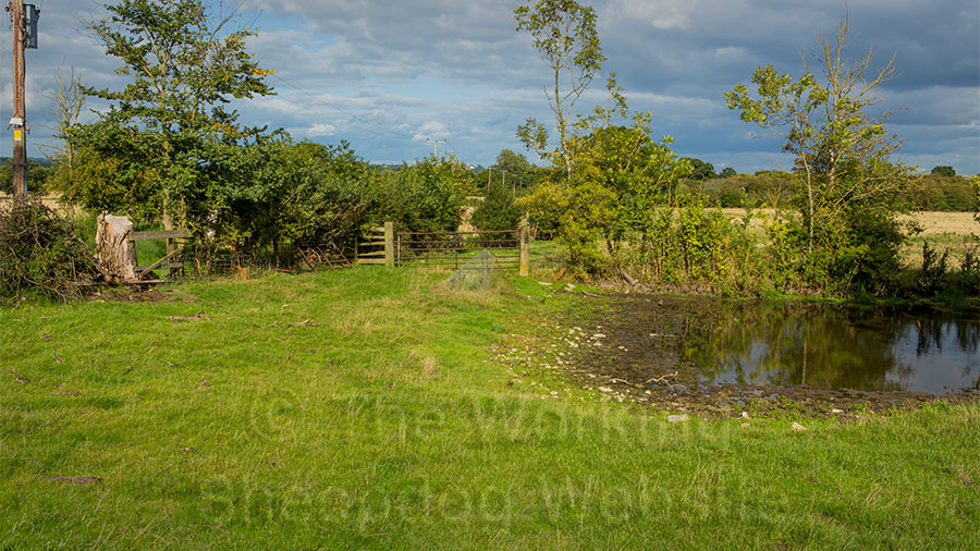 picture of the area where the sheep were trapped between the pond and the hedge