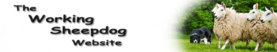 Banner for the Working Sheepdog Website, showing one of our earliest working sheepdogs, Glen, controlling a small group of sheep