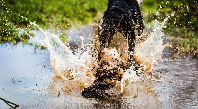 Picture of a big splash as Jan rushes through the water (away from the camera).