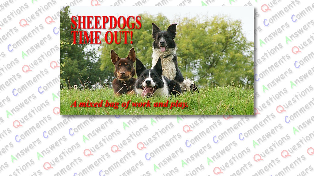 Title picture showing two border collies and a kelpie lying in the grass close together