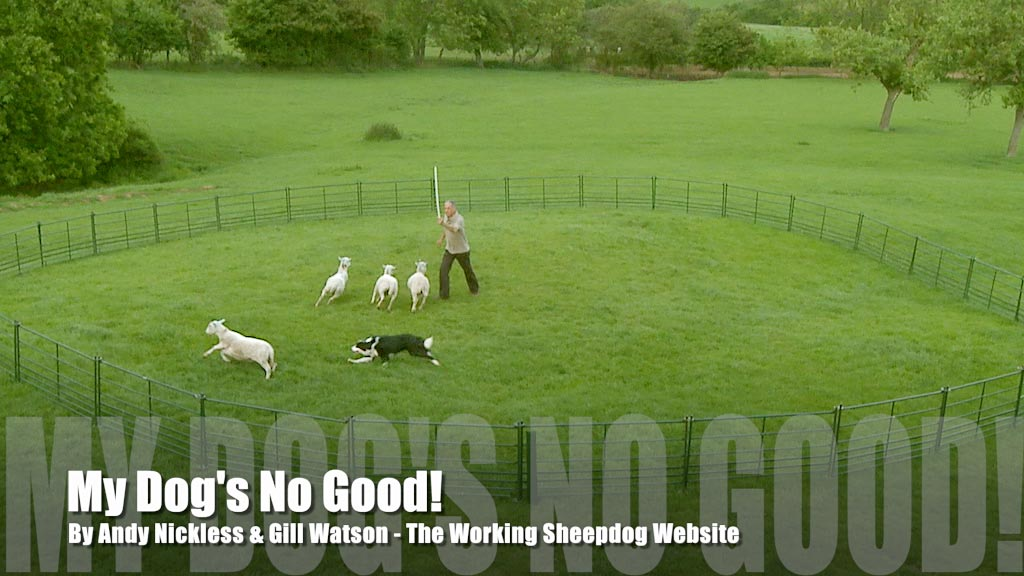 Cover Image for My Dog's No Good Sheepdog Training Tutorial