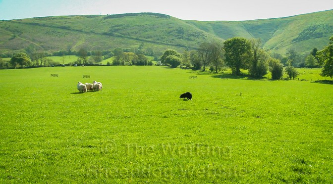 A wonderful view of the Shopshire Long Mynd hills from the South Shropshire Sheepdog Trial ground.