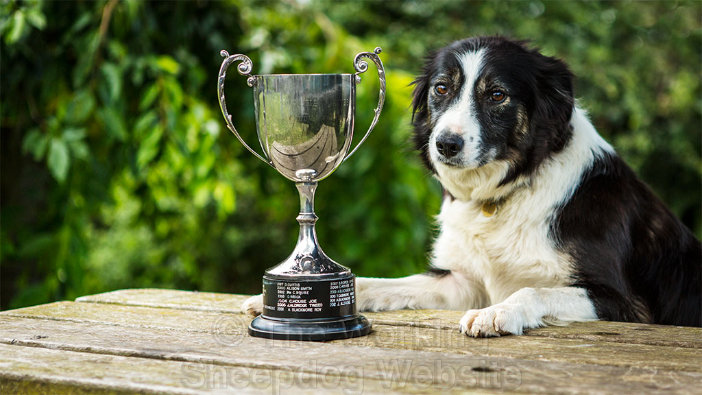 Sheepdog Carew poses with the silver trophy she won for best outrun, lift and fetch at Evesham Sheepdog Trials
