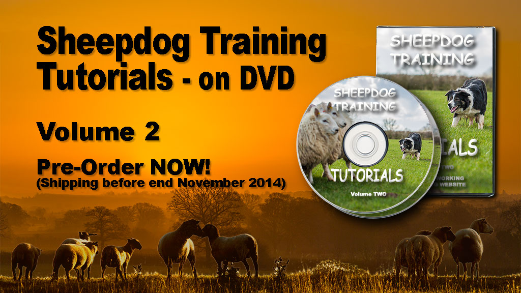 DVD about how to train a sheepdog