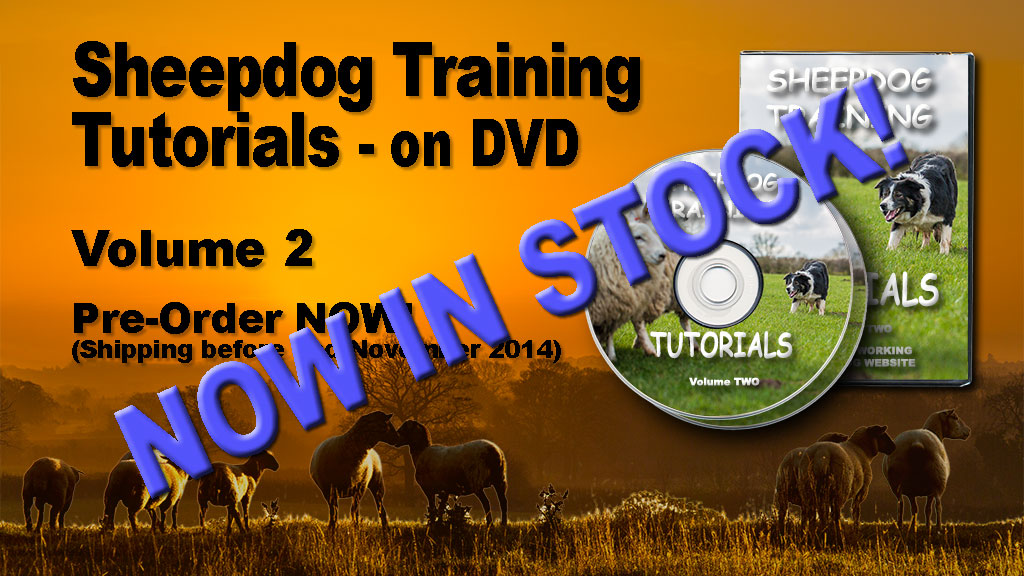sheepdog training tutorials DVD banner showing DVDs are now in stock!