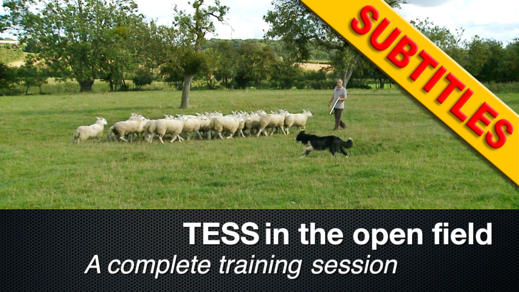 Tess working in the open field - a complete training session