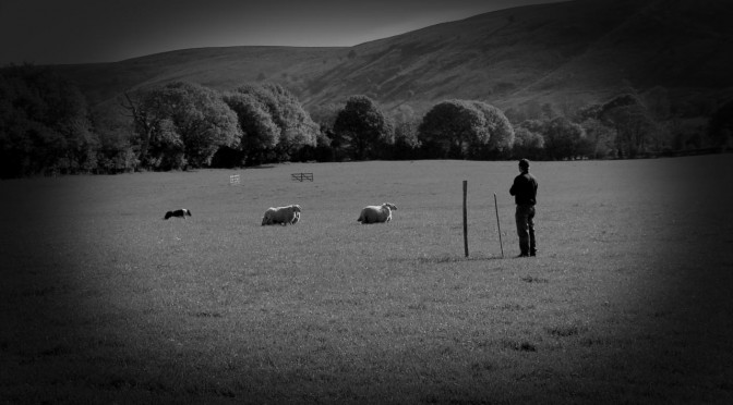 Cover photo of our video tutorial about the all important point of balance when training a sheepdog