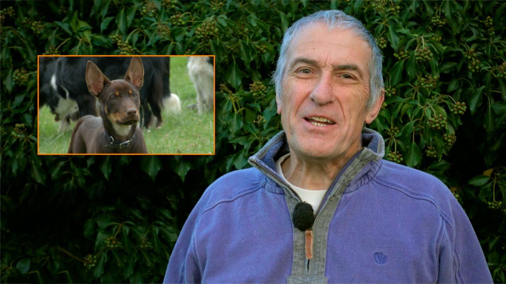 Sheepdog trainer Andy Nickless introduces Kelpie training