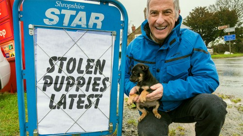 Tucker is one of the litter of kelpie puppies stolen from a Shropshire farm