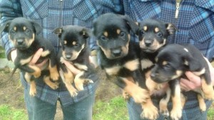 These puppies were all stolen yesterday