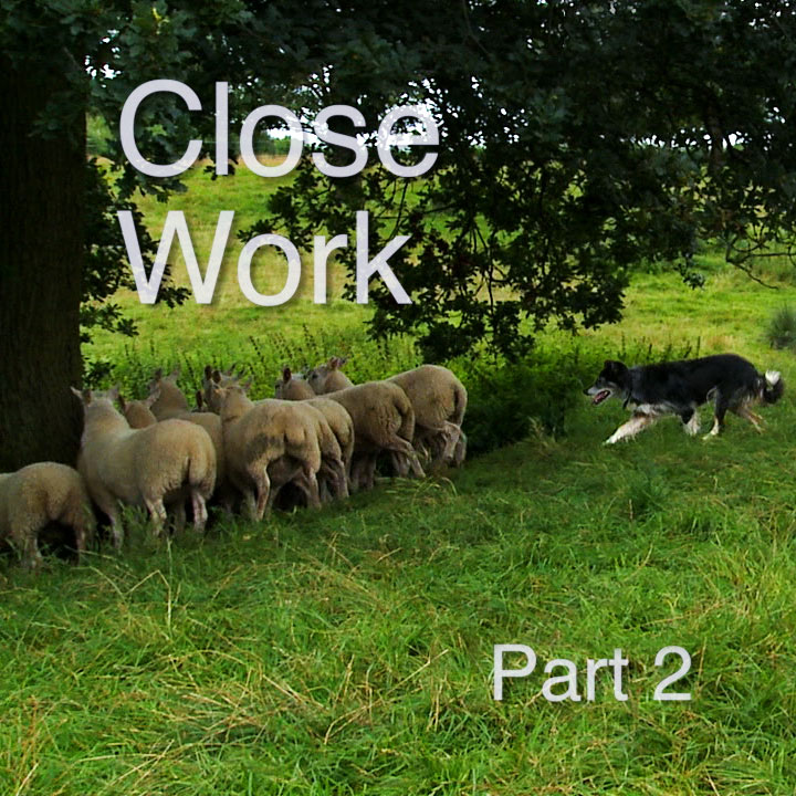 Title Image for Close Work sheepdog training tutorial