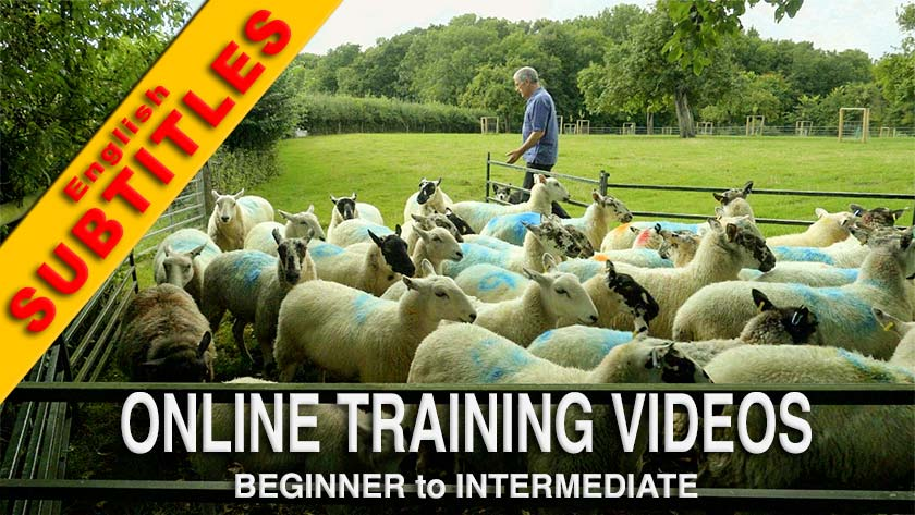 Cover picture of our Online Training Videos preview