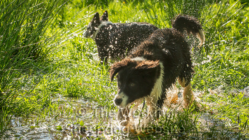 Close up of Fay (and Kay) splashing about in the pond on a hot day