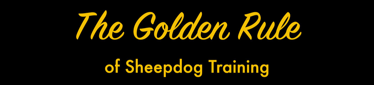 Title image for sheepdog training tutorial, The Golden Rule of Sheepdog Training