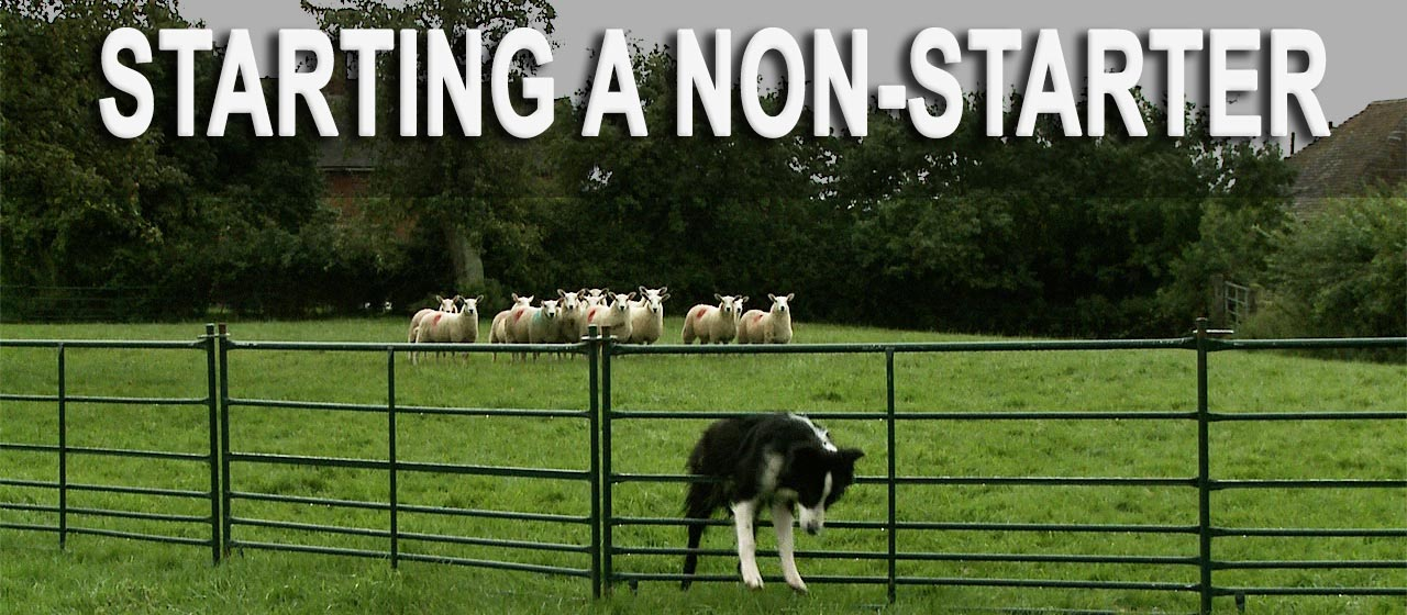Photo of a border collie clambering through a fence to get away from the sheep in the background