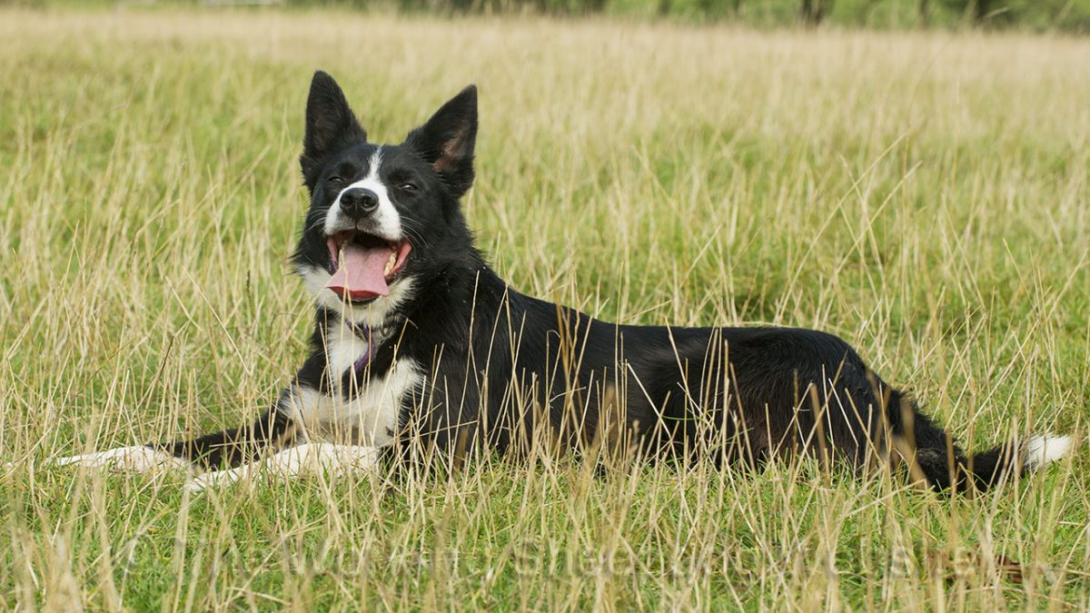 Photo of Maddie lying in the grass looking very confident and pleased with life!