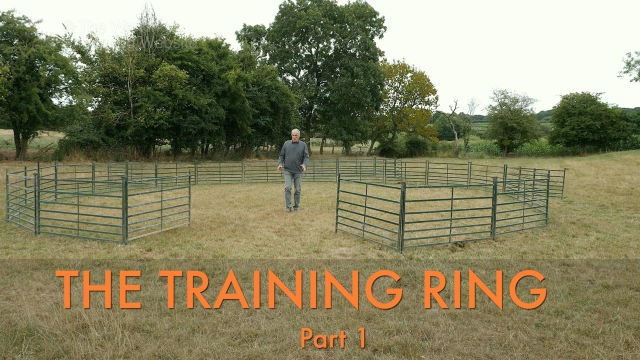 Photo of sheepdog trainer Andy standing inside a training ring made from sheep hurdles