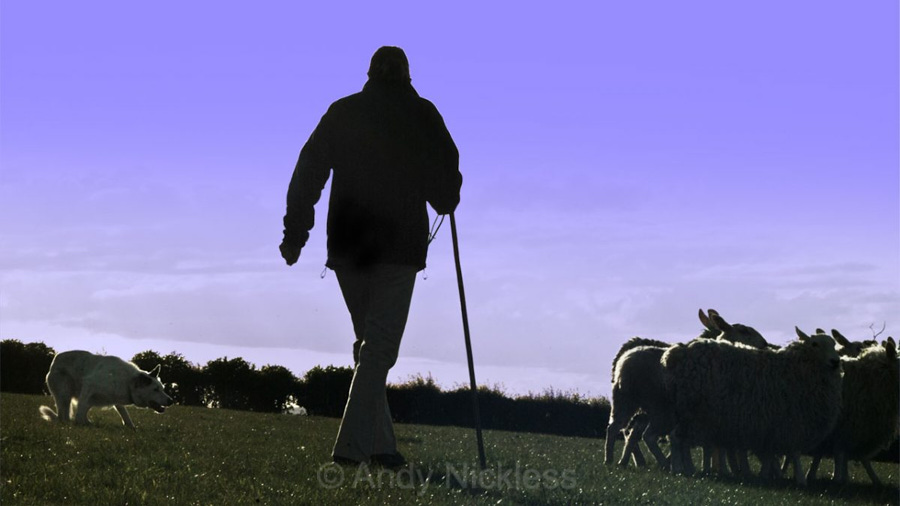 Silhouette image of a shepherd and dog moving a small bunch of sheep