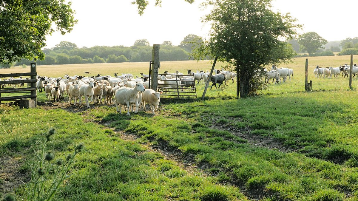 Far in the background, Dulcie keeps the entire flock heading for the gateway