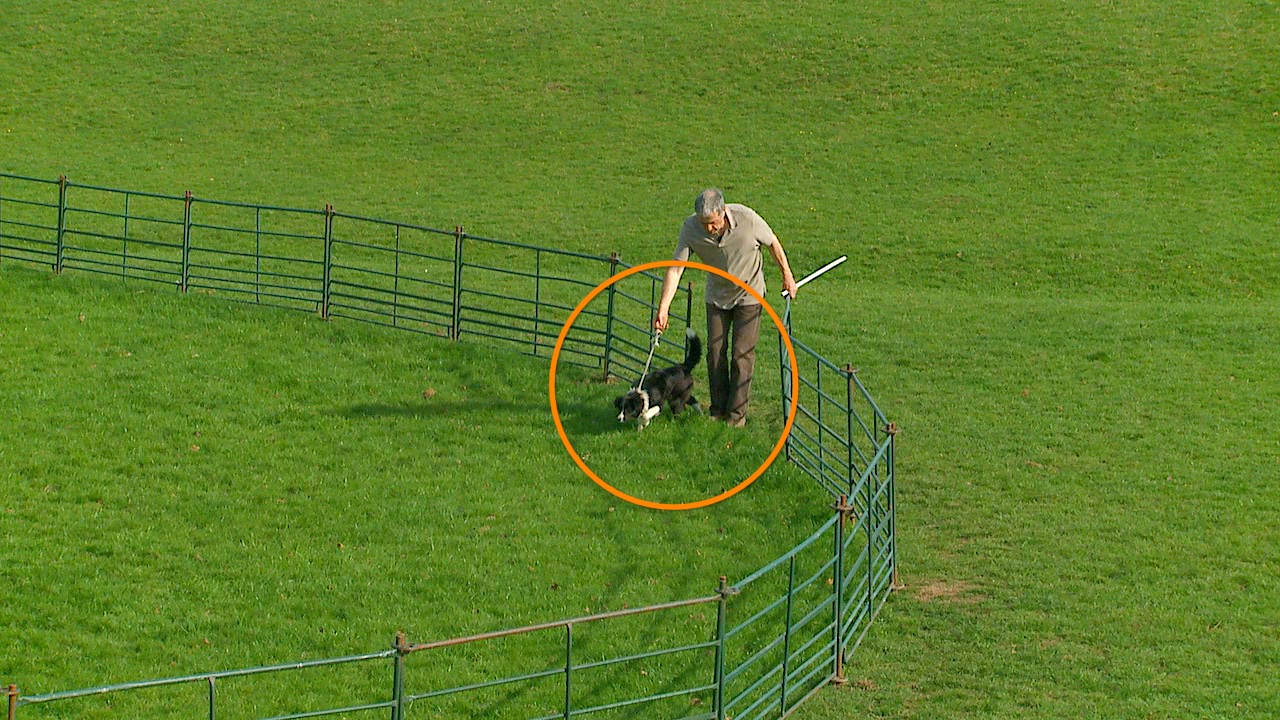 photo showing the dog with its tail in the air as it's led into the training ring